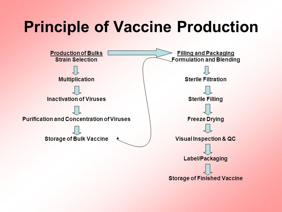 Principle of Vaccine Production Production of Bulks Strain Selection Multiplication Inactivation of Viruses Purification and Concentration of Viruses