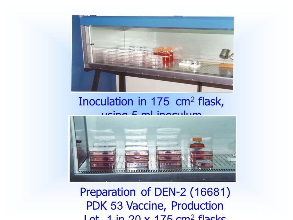 11 Inoculation in 175 cm 2 flask, using 5 ml inoculum Preparation of DEN-2 (16681) PDK 53 Vaccine, Production Lot. 1 in 20 x 175 cm 2 flasks