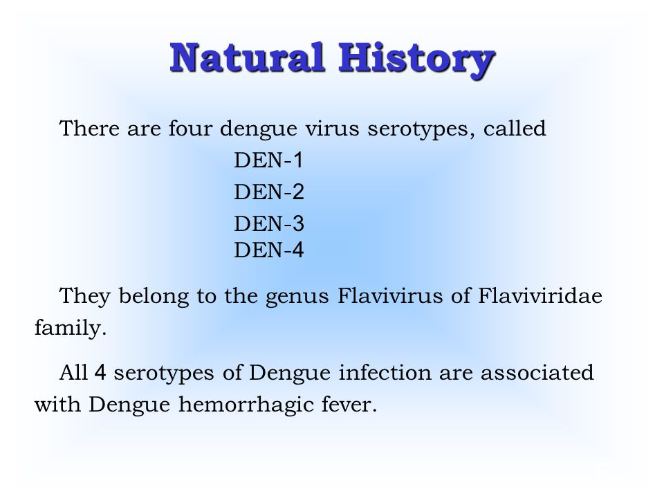 5 Natural History There are four dengue virus serotypes, called DEN-1 DEN-2 DEN-3 DEN-4 They belong to the genus Flavivirus of Flaviviridae family. Al