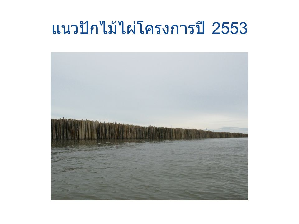 แนวปักไม้ไผ่โครงการปี 2553