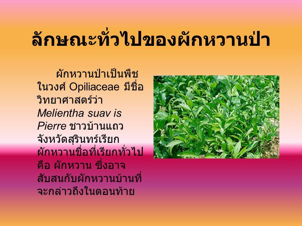 ลักษณะทั่วไปของผักหวานป่า ผักหวานป่าเป็นพืช ในวงศ์ Opiliaceae มีชื่อ วิทยาศาสตร์ว่า Melientha suav is Pierre ชาวบ้านแถว จังหวัดสุรินทร์เรียก ผักหวานชื