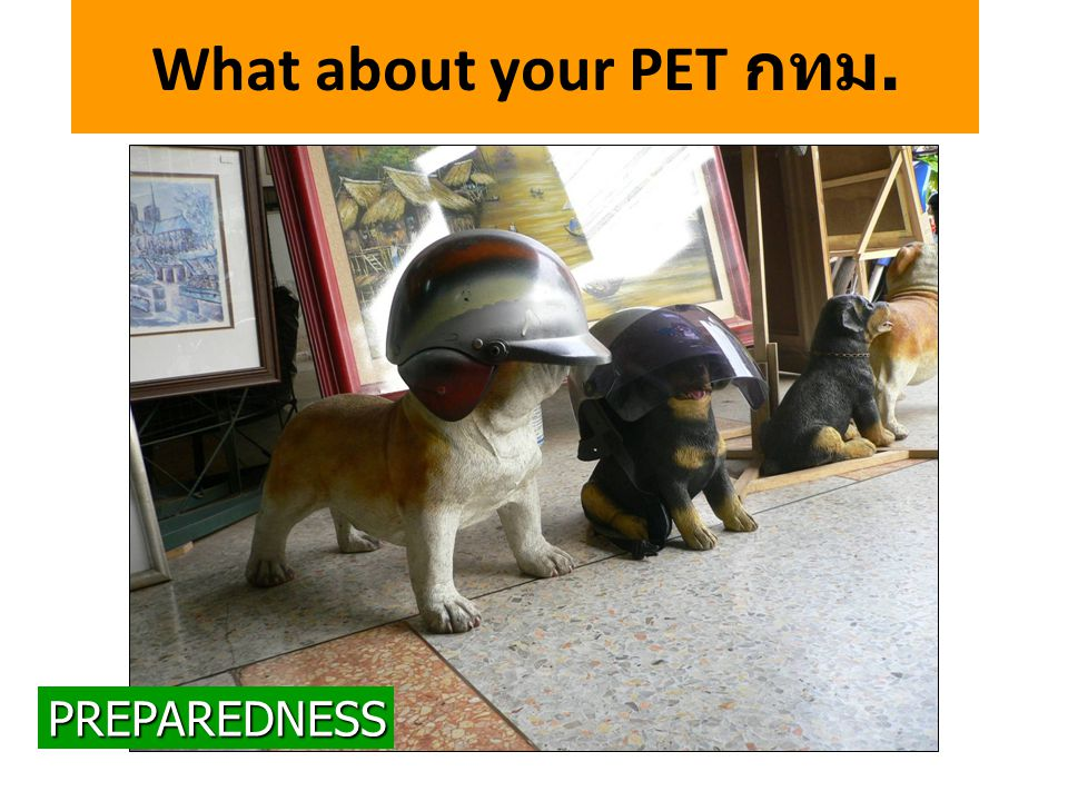 What about your PET กทม.PREPAREDNESS