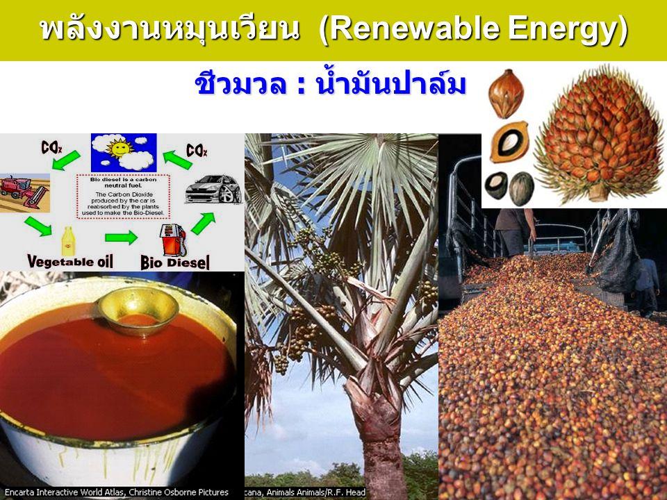 34 พลังงานหมุนเวียน (Renewable Energy) ชีวมวล : น้ำมันปาล์ม