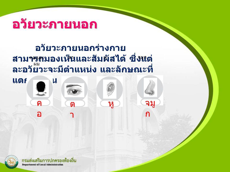อวัยวะภายนอก อวัยวะภายนอกร่างกาย สามารถมองเห็นและสัมผัสได้ ซึ่งแต่ ละอวัยวะจะมีตำแหน่ง และลักษณะที่ แตกต่างกัน ตา หู จมูก คอและ ผม คอคอ ตาตา หู จมู ก