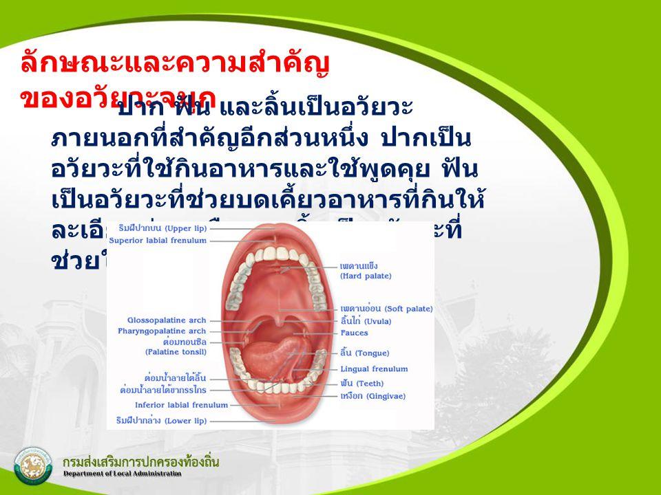 ลักษณะและความสำคัญ ของอวัยวะจมูก ปาก ฟัน และลิ้นเป็นอวัยวะ ภายนอกที่สำคัญอีกส่วนหนึ่ง ปากเป็น อวัยวะที่ใช้กินอาหารและใช้พูดคุย ฟัน เป็นอวัยวะที่ช่วยบด