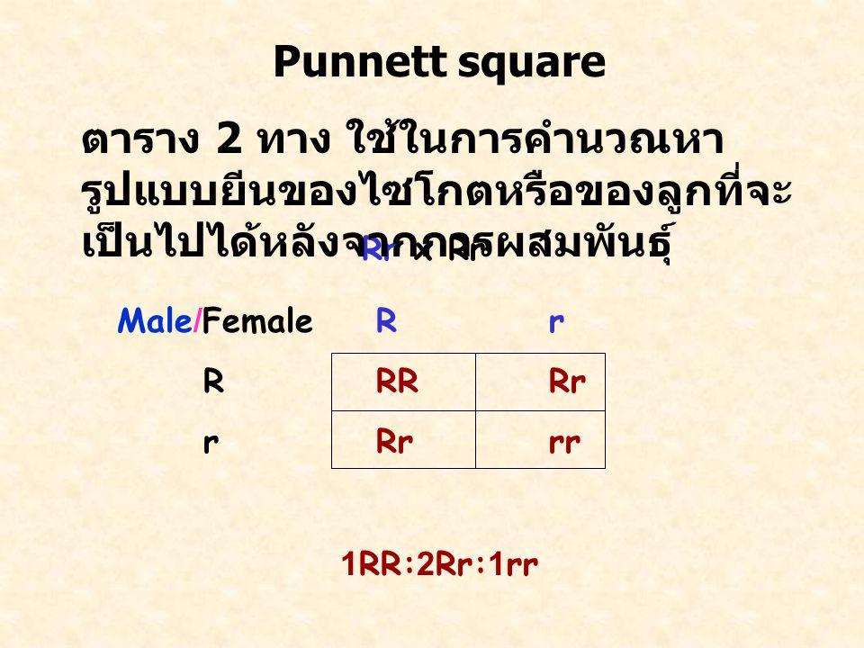 Male/FemaleRr RRRRr rRrrr 1RR:2Rr:1rr Rr x Rr Punnett square ตาราง 2 ทาง ใช้ในการคำนวณหา รูปแบบยีนของไซโกตหรือของลูกที่จะ เป็นไปได้หลังจากการผสมพันธุ์