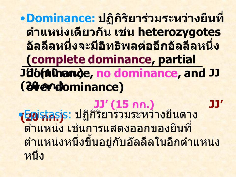 Dominance: ปฏิกิริยาร่วมระหว่างยีนที่ ตำแหน่งเดียวกัน เช่น heterozygotes อัลลีลหนึ่งจะมีอิทธิพลต่ออีกอัลลีลหนึ่ง (complete dominance, partial dominance, no dominance, and over dominance) J'J' (10 กก.)JJ (20 กก.) JJ' (15 กก.) JJ' (20 กก.) Epistasis: ปฏิกิริยาร่วมระหว่างยีนต่าง ตำแหน่ง เช่นการแสดงออกของยีนที่ ตำแหน่งหนึ่งขึ้นอยู่กับอัลลีลในอีกตำแหน่ง หนึ่ง Sex-Related Inheritance: การแสดงออก ของยีนขึ้นอยู่กับเพศ (sex-linked, sex- limited, and sex influenced inheritance)