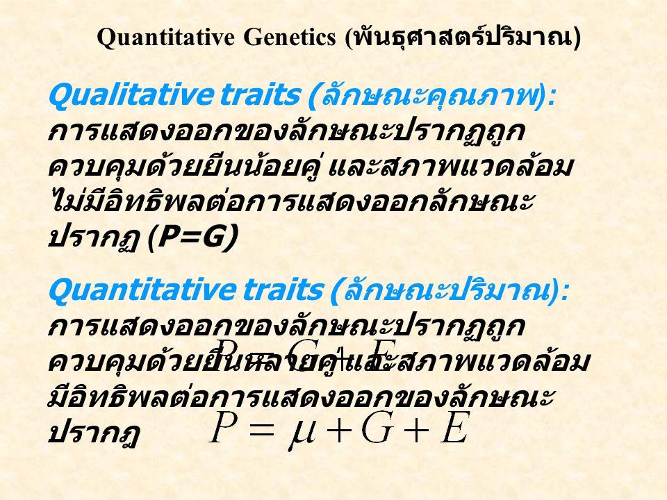 Quantitative Genetics ( พันธุศาสตร์ปริมาณ ) Qualitative traits ( ลักษณะคุณภาพ ): การแสดงออกของลักษณะปรากฏถูก ควบคุมด้วยยีนน้อยคู่ และสภาพแวดล้อม ไม่มีอิทธิพลต่อการแสดงออกลักษณะ ปรากฏ (P=G) Quantitative traits ( ลักษณะปริมาณ ): การแสดงออกของลักษณะปรากฏถูก ควบคุมด้วยยีนหลายคู่ และสภาพแวดล้อม มีอิทธิพลต่อการแสดงออกของลักษณะ ปรากฎ