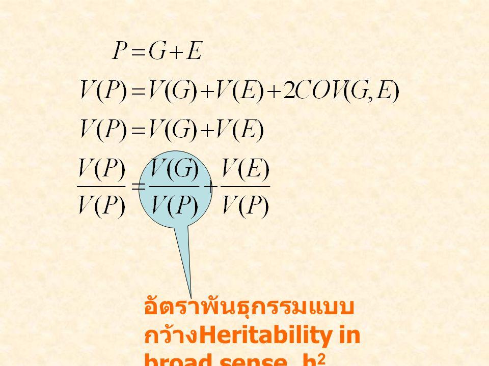 อัตราพันธุกรรมแบบ กว้าง Heritability in broad sense, h 2