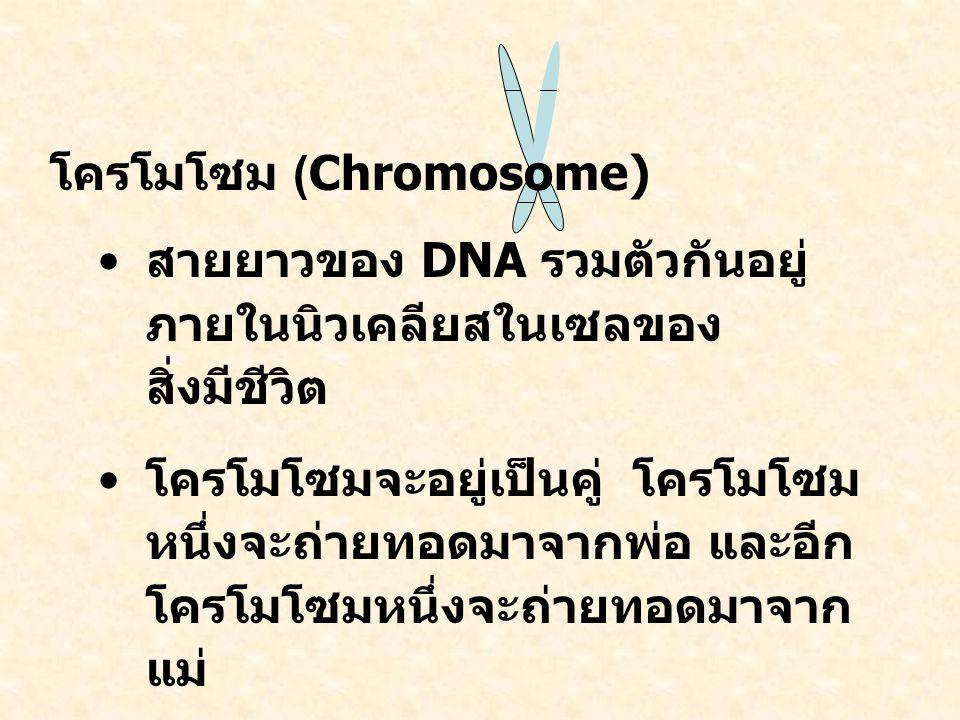 โครโมโซม (Chromosome) สายยาวของ DNA รวมตัวกันอยู่ ภายในนิวเคลียสในเซลของ สิ่งมีชีวิต โครโมโซมจะอยู่เป็นคู่ โครโมโซม หนึ่งจะถ่ายทอดมาจากพ่อ และอีก โครโมโซมหนึ่งจะถ่ายทอดมาจาก แม่ จำนวนคู่ของโครโมโซมจะขึ้นอยู่ กับชนิดของสัตว์