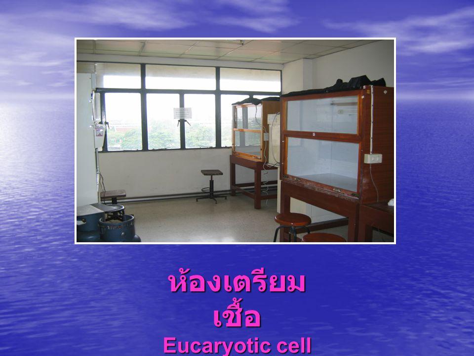 ห้องเตรียม เชื้อ Eucaryotic cell