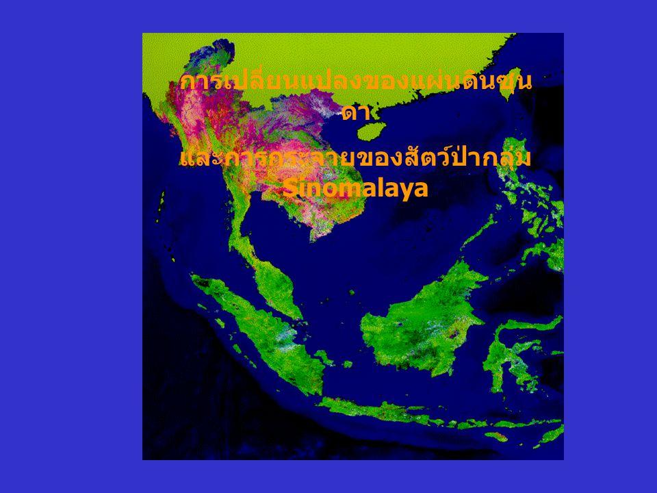 การเปลี่ยนแปลงของแผ่นดินซุน ดา และการกระจายของสัตว์ป่ากลุ่ม Sinomalaya