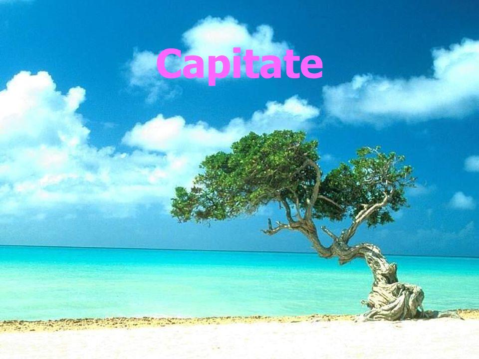 ด้วงผลไม้ Carpophilus dimidiatus