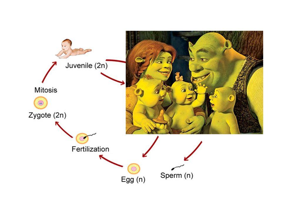 สัตว์เลี้ยงลูกด้วยนมที่เกิดมาและมีชีวิตรอดอยู่ได้ จาก เซลล์ที่ได้จากตัวอ่อนและตัวเต็มวัย Nature 1997, 385: 810-3 ศ.
