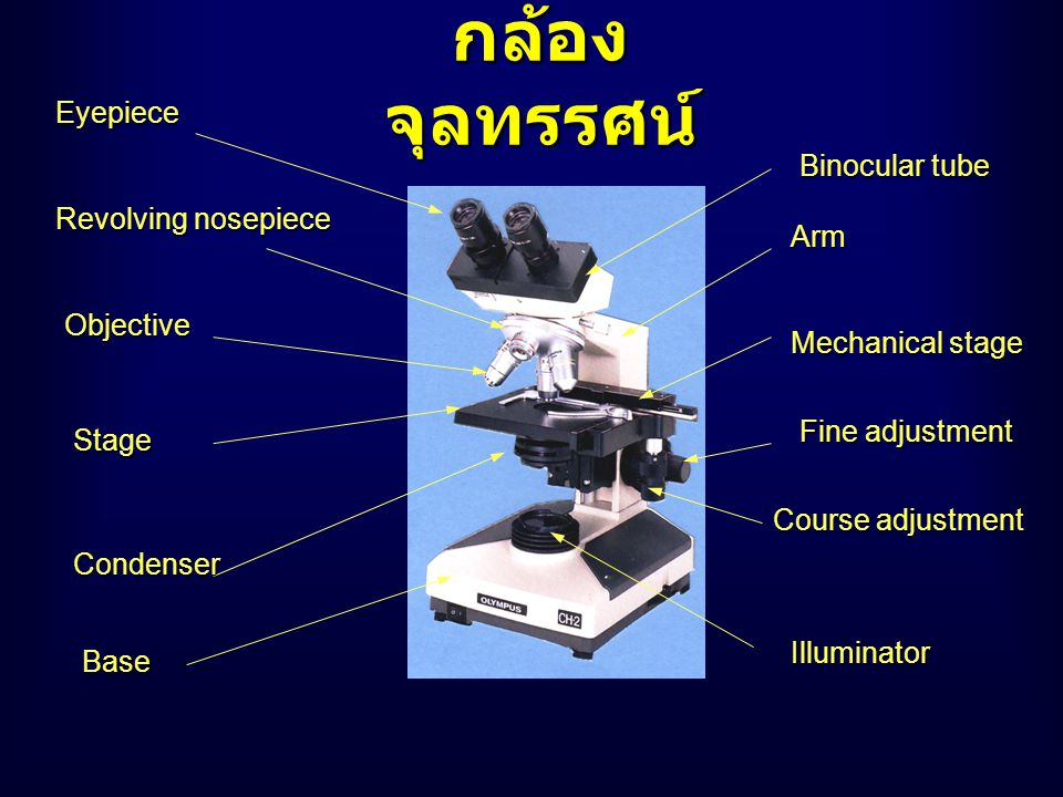 กล้อง จุลทรรศน์ Eyepiece Arm Stage Condenser Base Objective Revolving nosepiece Mechanical stage Fine adjustment Course adjustment Binocular tube Illuminator