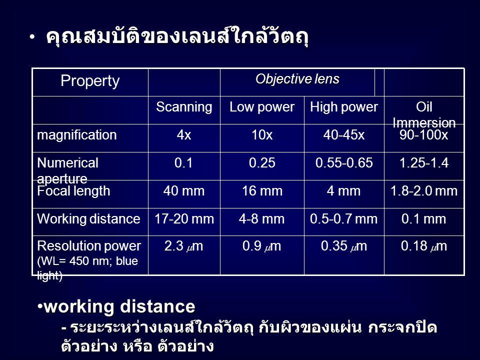 working distanceworking distance - ระยะระหว่างเลนส์ใกล้วัตถุ กับผิวของแผ่น กระจกปิด ตัวอย่าง หรือ ตัวอย่าง Objective lens Property Oil Immersion High powerLow powerScanning 0.18  m0.35  m0.9  m2.3  mResolution power (WL= 450 nm; blue light) 1.8-2.0 mm4 mm16 mm40 mmFocal length 0.1 mm0.5-0.7 mm4-8 mm17-20 mmWorking distance 1.25-1.40.55-0.650.250.1Numerical aperture 90-100x40-45x10x4xmagnification คุณสมบัติของเลนส์ใกล้วัตถุ คุณสมบัติของเลนส์ใกล้วัตถุ