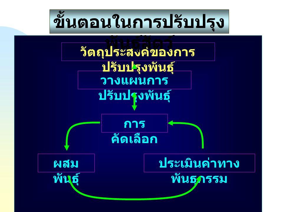 การ คัดเลือก วางแผนการ ปรับปรุงพันธุ์ ผสม พันธุ์ ประเมินค่าทาง พันธุกรรม วัตถุประสงค์ของการ ปรับปรุงพันธุ์ ขั้นตอนในการปรับปรุง พันธุ์สัตว์