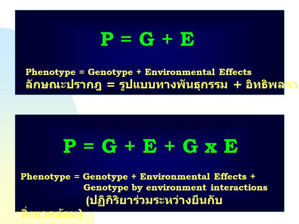 P = G + E Phenotype = Genotype + Environmental Effects ลักษณะปรากฎ = รูปแบบทางพันธุกรรม + อิทธิพลจากสิ่งแวดล้อม P = G + E + G x E Phenotype = Genotype
