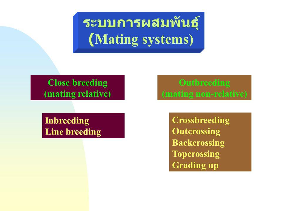 ระบบการผสมพันธุ์ (Mating systems) Close breeding (mating relative) Outbreeding (mating non-relative) Inbreeding Line breeding Crossbreeding Outcrossin