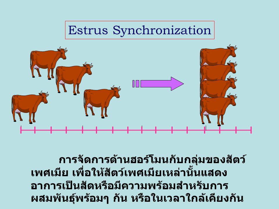Superovulation การจัดการด้านฮอร์โมนกับ สัตว์เพศเมีย เพื่อให้สัตว์เพศเมีย เหล่านั้นผลิตไข่ที่สมบูรณ์และตก ไข่ออกมามากกว่าปกติ 1 egg / 1 cycle normal ovulation superovulation Hormones n eggs/ 1 cycle