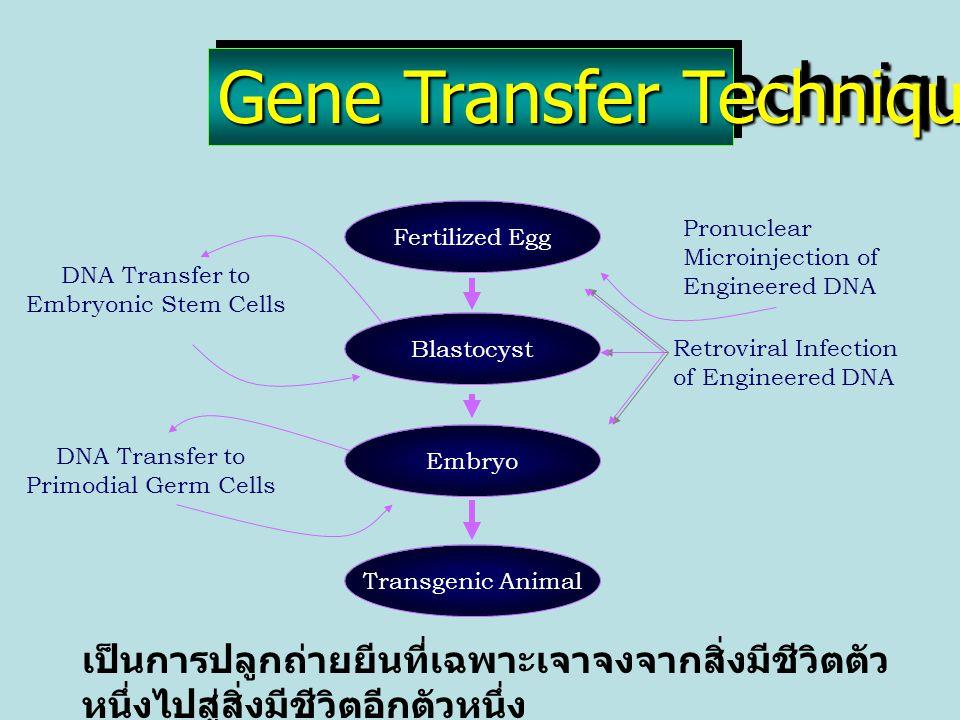 Genetic Evaluation Technology เทคโนโลยีในการประมาณค่าทางพันธุกรรม v การประมาณองค์ประกอบความ แปรปรวน v วิธีการในการประมาณค่าทาง พันธุกรรม v แบบหุ่นในการประมาณค่าทาง พันธุกรรม v เทคโนโลยีทางคอมพิวเตอร์