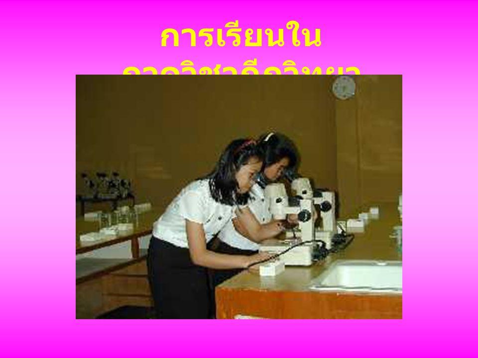 การเรียนใน ภาควิชากีฏวิทยา