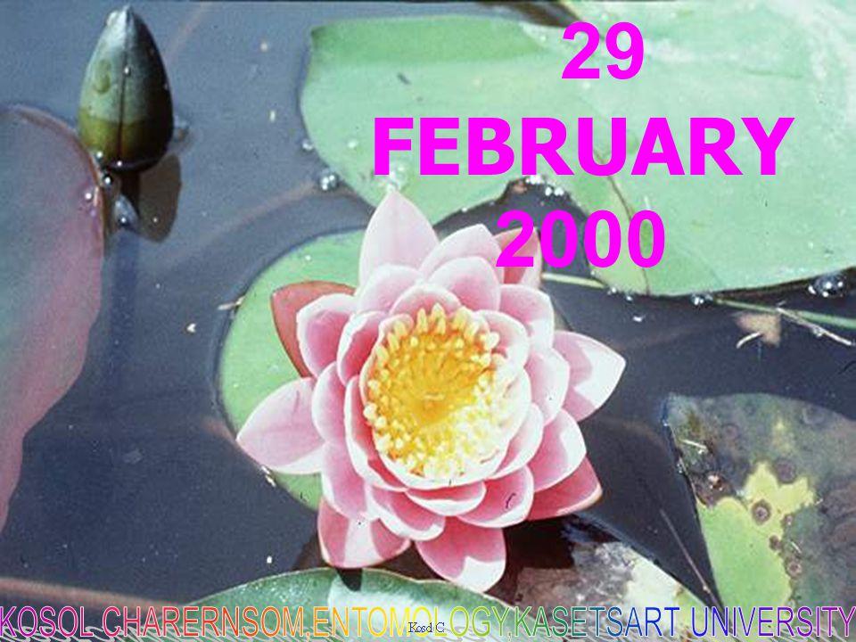 COPYRIGHT 29 FEBRUARY 2000