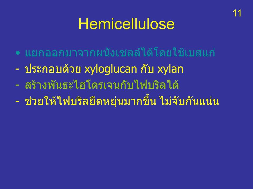 Hemicellulose แยกออกมาจากผนังเซลล์ได้โดยใช้เบสแก่ -ประกอบด้วย xyloglucan กับ xylan -สร้างพันธะไฮโดรเจนกับไฟบริลได้ -ช่วยให้ไฟบริลยืดหยุ่นมากขึ้น ไม่จั
