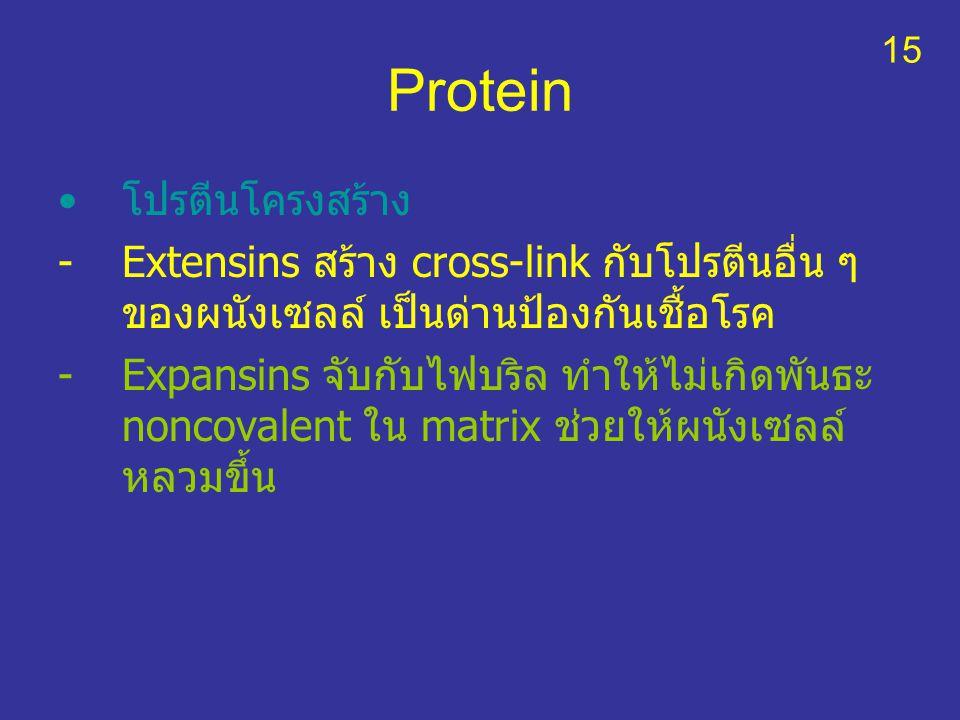 Protein โปรตีนโครงสร้าง -Extensins สร้าง cross-link กับโปรตีนอื่น ๆ ของผนังเซลล์ เป็นด่านป้องกันเชื้อโรค -Expansins จับกับไฟบริล ทำให้ไม่เกิดพันธะ non