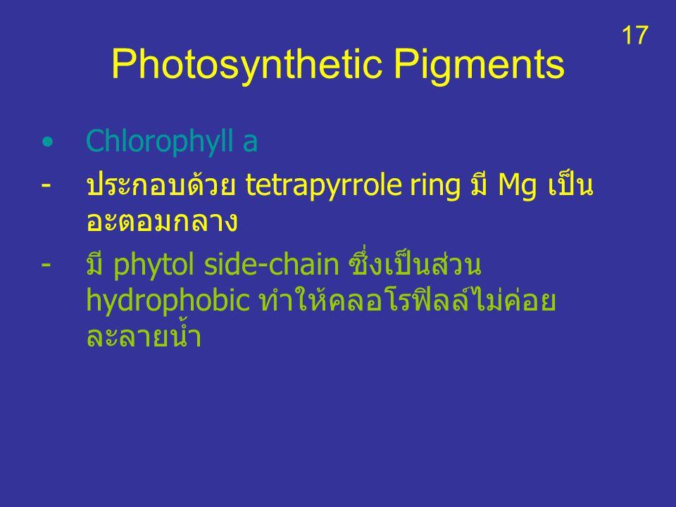 Photosynthetic Pigments Chlorophyll a -ประกอบด้วย tetrapyrrole ring มี Mg เป็น อะตอมกลาง -มี phytol side-chain ซึ่งเป็นส่วน hydrophobic ทำให้คลอโรฟิลล
