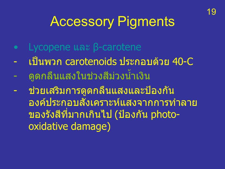 Accessory Pigments Lycopene และ β-carotene -เป็นพวก carotenoids ประกอบด้วย 40-C -ดูดกลืนแสงในช่วงสีม่วงน้ำเงิน -ช่วยเสริมการดูดกลืนแสงและป้องกัน องค์ป