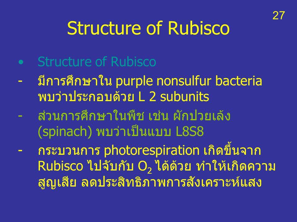 Structure of Rubisco -มีการศึกษาใน purple nonsulfur bacteria พบว่าประกอบด้วย L 2 subunits -ส่วนการศึกษาในพืช เช่น ผักปวยเล้ง (spinach) พบว่าเป็นแบบ L8