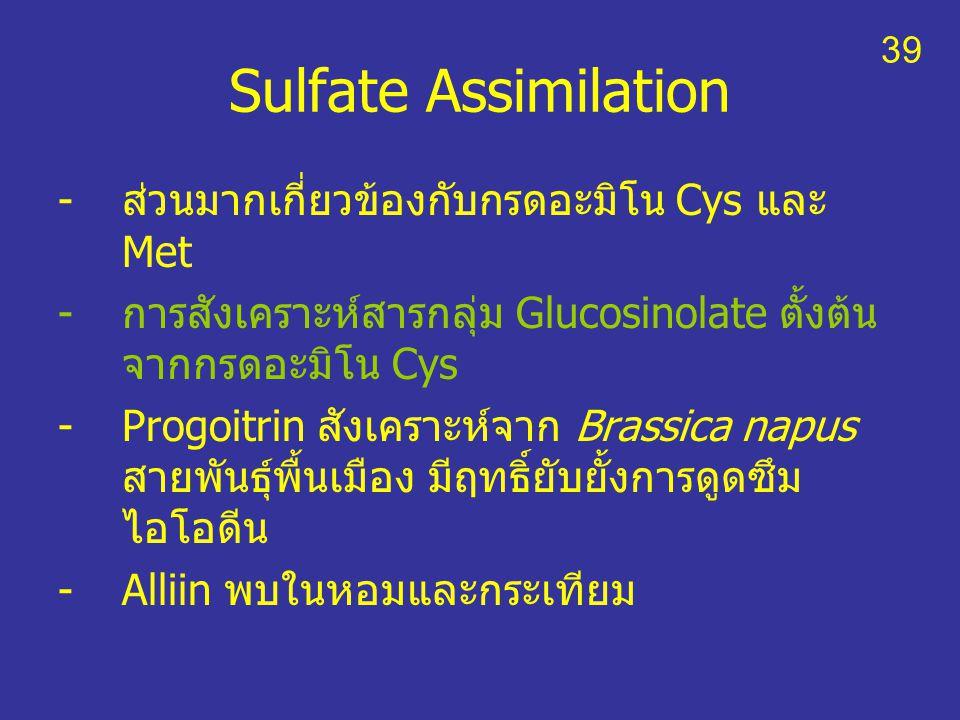 Sulfate Assimilation -ส่วนมากเกี่ยวข้องกับกรดอะมิโน Cys และ Met -การสังเคราะห์สารกลุ่ม Glucosinolate ตั้งต้น จากกรดอะมิโน Cys -Progoitrin สังเคราะห์จา