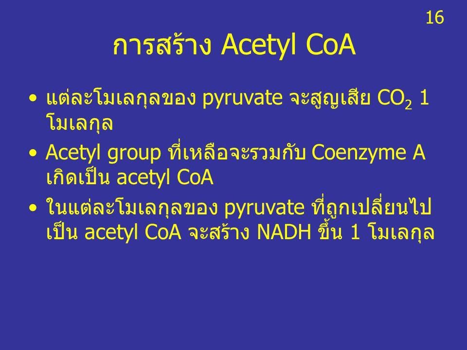 การสร้าง Acetyl CoA แต่ละโมเลกุลของ pyruvate จะสูญเสีย CO 2 1 โมเลกุล Acetyl group ที่เหลือจะรวมกับ Coenzyme A เกิดเป็น acetyl CoA ในแต่ละโมเลกุลของ p