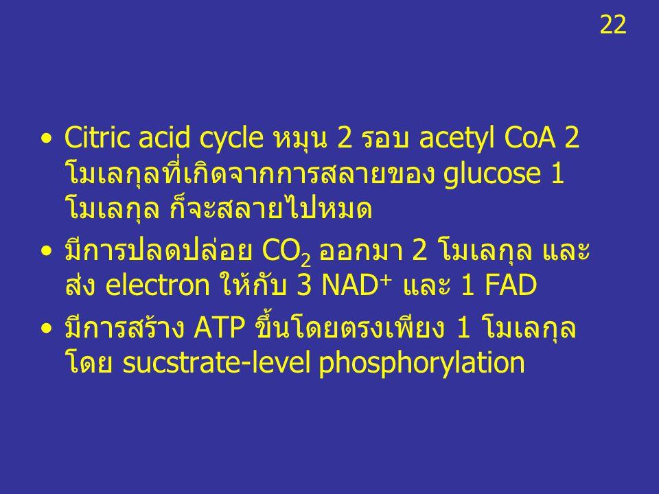 Citric acid cycle หมุน 2 รอบ acetyl CoA 2 โมเลกุลที่เกิดจากการสลายของ glucose 1 โมเลกุล ก็จะสลายไปหมด มีการปลดปล่อย CO 2 ออกมา 2 โมเลกุล และ ส่ง elect