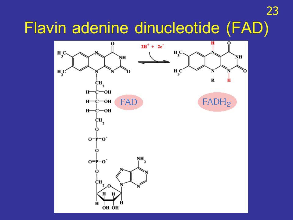 Flavin adenine dinucleotide (FAD) 23