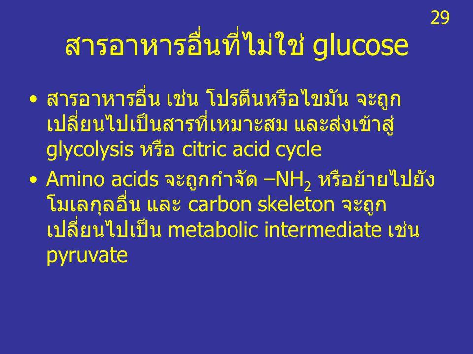 สารอาหารอื่นที่ไม่ใช่ glucose สารอาหารอื่น เช่น โปรตีนหรือไขมัน จะถูก เปลี่ยนไปเป็นสารที่เหมาะสม และส่งเข้าสู่ glycolysis หรือ citric acid cycle Amino