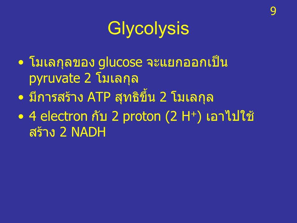 Glycolysis โมเลกุลของ glucose จะแยกออกเป็น pyruvate 2 โมเลกุล มีการสร้าง ATP สุทธิขึ้น 2 โมเลกุล 4 electron กับ 2 proton (2 H + ) เอาไปใช้ สร้าง 2 NAD