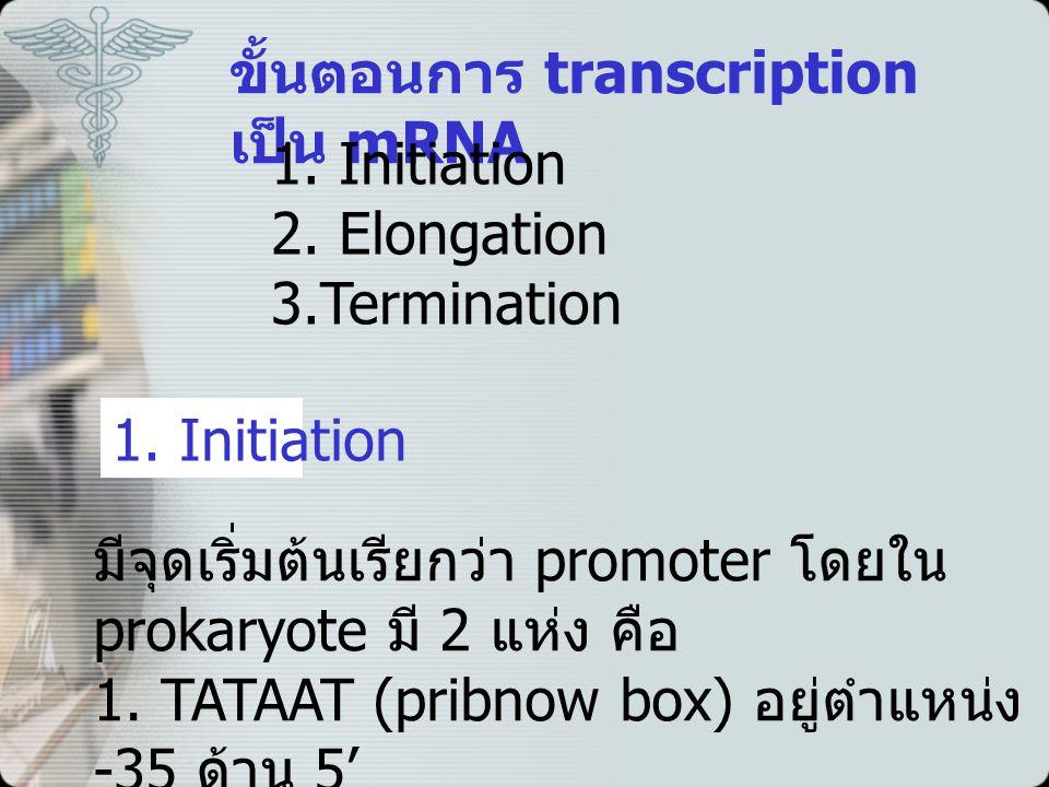 ขั้นตอนการ transcription เป็น mRNA 1.Initiation 2.