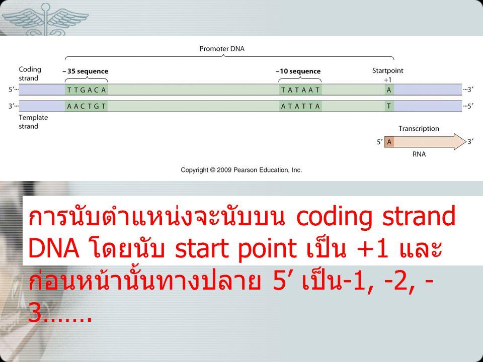 การนับตำแหน่งจะนับบน coding strand DNA โดยนับ start point เป็น +1 และ ก่อนหน้านั้นทางปลาย 5' เป็น -1, -2, - 3…….