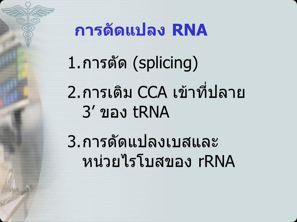 การดัดแปลง RNA 1.การตัด (splicing) 2. การเติม CCA เข้าที่ปลาย 3' ของ tRNA 3.