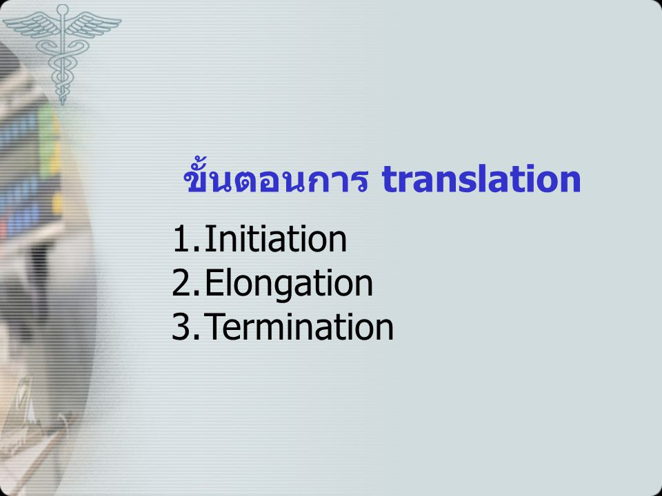 ขั้นตอนการ translation 1.Initiation 2.Elongation 3.Termination