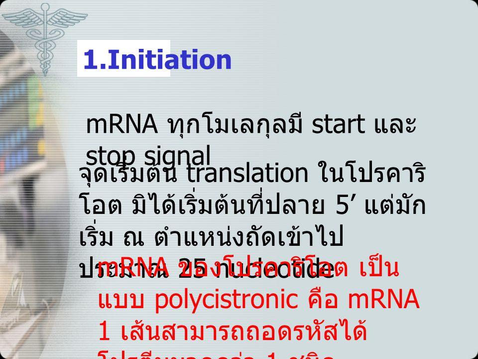 1.Initiation mRNA ทุกโมเลกุลมี start และ stop signal จุดเริ่มต้น translation ในโปรคาริ โอต มิได้เริ่มต้นที่ปลาย 5' แต่มัก เริ่ม ณ ตำแหน่งถัดเข้าไป ประมาณ 25 nucleotide mRNA ของโปรคาริโอต เป็น แบบ polycistronic คือ mRNA 1 เส้นสามารถถอดรหัสได้ โปรตีนมากกว่า 1 ชนิด