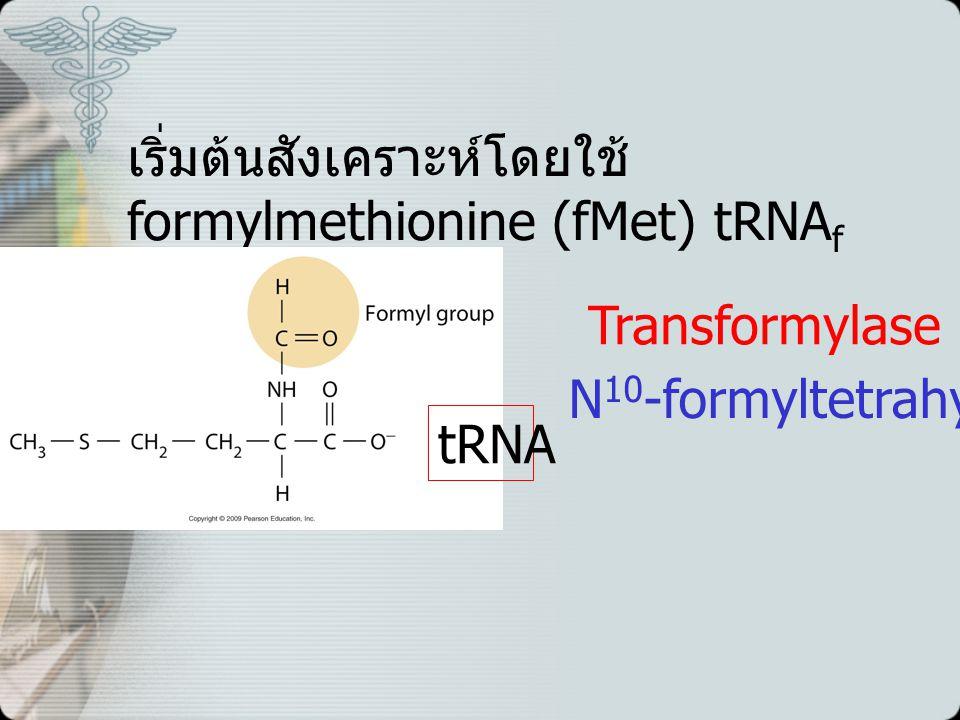 เริ่มต้นสังเคราะห์โดยใช้ formylmethionine (fMet) tRNA f tRNA Transformylase N 10 -formyltetrahydrofolate
