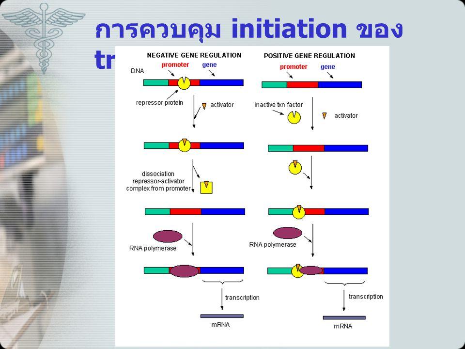 การควบคุม initiation ของ transcription