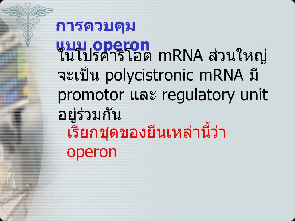 การควบคุม แบบ operon ในโปรคาริโอต mRNA ส่วนใหญ่ จะเป็น polycistronic mRNA มี promotor และ regulatory unit อยู่ร่วมกัน เรียกชุดของยีนเหล่านี้ว่า operon