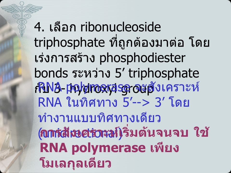 Protein synthesis หรือ Translation