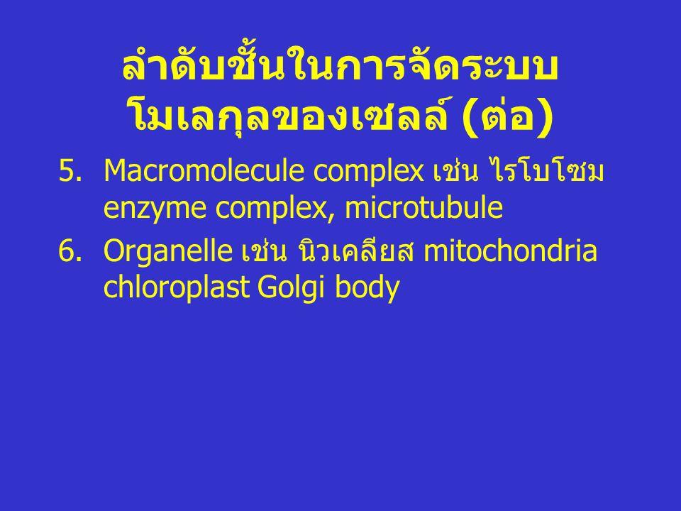 ลำดับชั้นในการจัดระบบ โมเลกุลของเซลล์ ( ต่อ ) 5.Macromolecule complex เช่น ไรโบโซม enzyme complex, microtubule 6.Organelle เช่น นิวเคลียส mitochondria