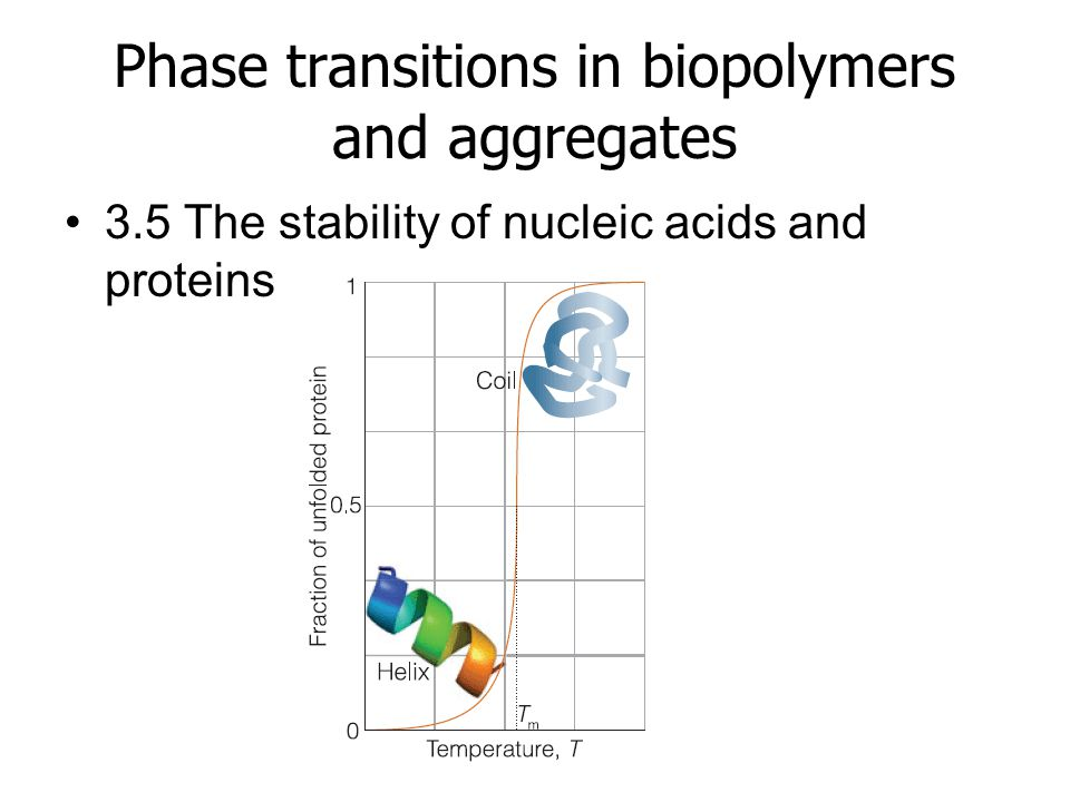 Phase transitions in biopolymers and aggregates 3.5 The stability of nucleic acids and proteins