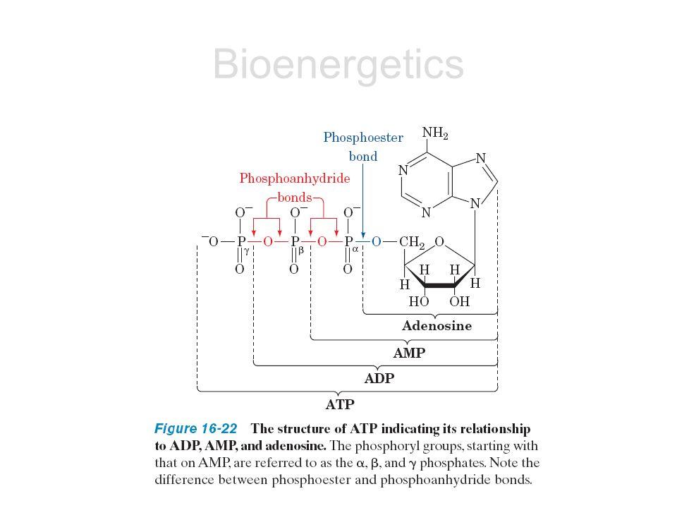 การ couple กันของปฏิกิริยา ตัวอย่างเช่น การเติมหมู่ฟอสเฟตให้กลูโคส ใช้ พลังงานจาก ATP